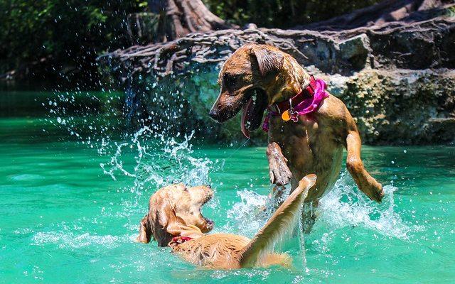 Milyen gyakran fürdessük a kutyát