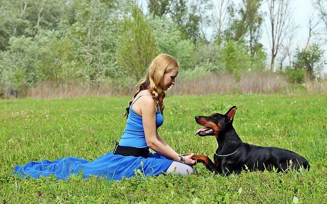 A fekszik vezényszó megtanítása a kutyánknak