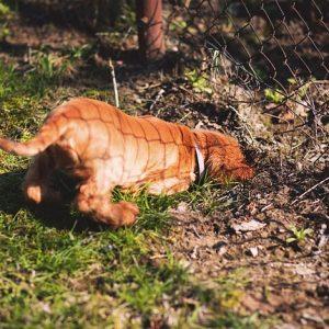Kutya - gödrök a kertben