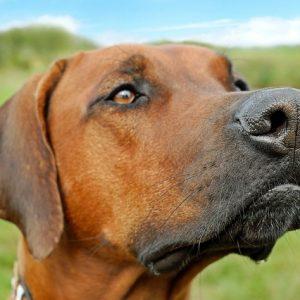 Beteg-e a kutyánk, ha száraz az orra