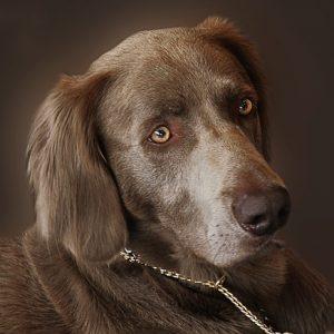 Mit próbál közölni velem a kutyám?