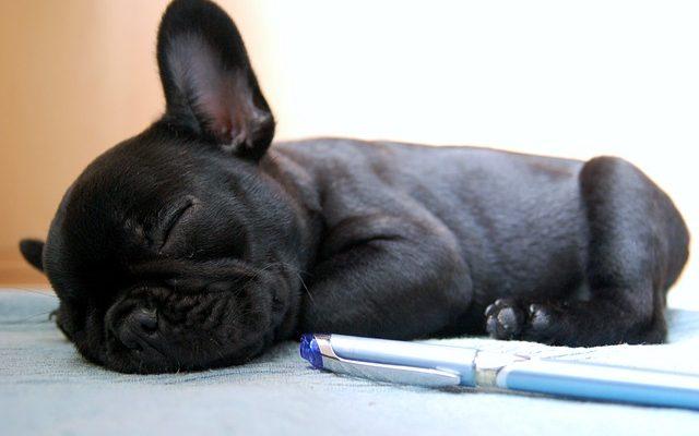 Álmodnak-e a kutyák?