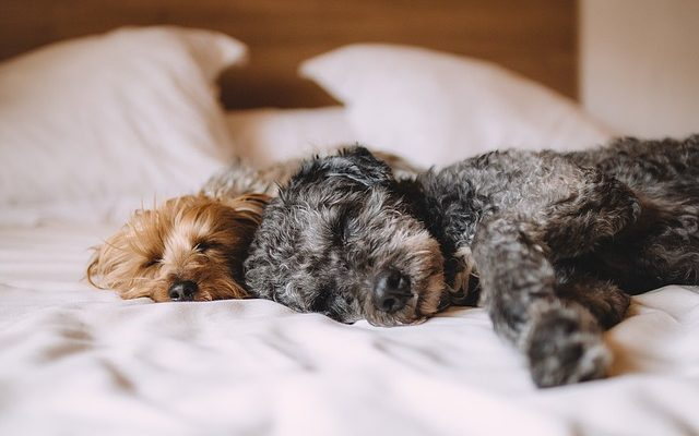 Együtt alvás a kutyával
