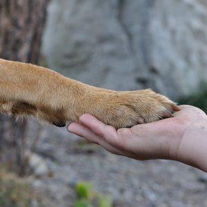 Kutya kiszagolja a rákot
