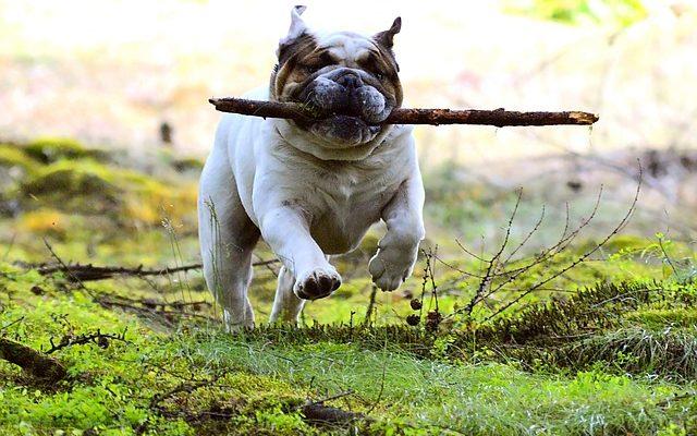 Mennyi ideig élnek a kutyák