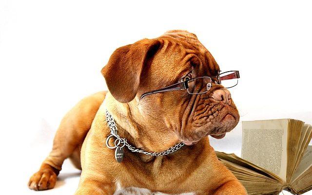 Google kutya diagnosztizálás